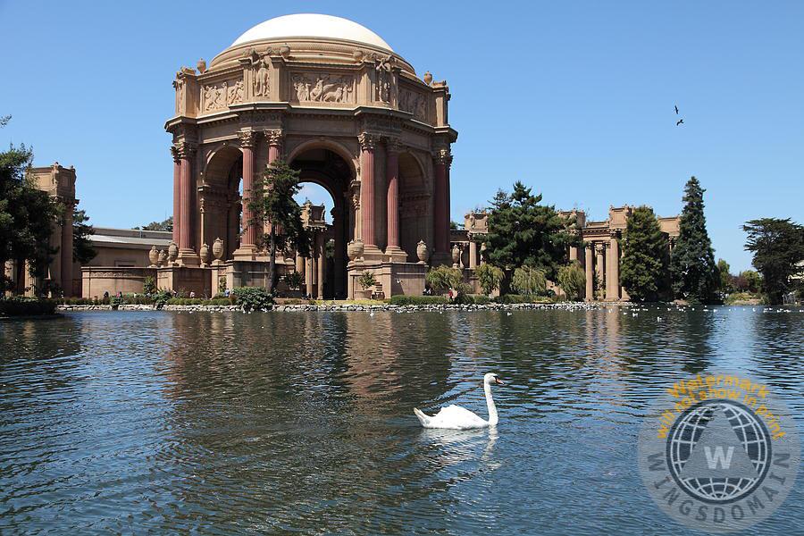 ... Animal San Francisco, Sf, Sanfrancisco, California, Ca, Frisco, Bay Area ,