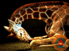 animal,animals,nature,outdoor,wildlife,giraffe,giraffes,giraffidae,menagerie,africa,serengeti,tanzania,safari,somalia,niger,nigeria,savannas,zoo,zoos,zoo animal,zoo animals,stripe,stripes,tall,tall animal,tall animals,long neck,neck,necks,necky,long,creature,creatures,mammal,mammals,herd,herds,funny,weird,strange,fun,happy,cheerful,whimsical,pop,popart,pop art,andy warhol,kitsch,kitschy,the,and,or,for,brunaille,wing tong,wing chee tong,wingsdomain